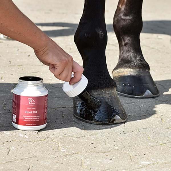 Casco de caballo al que se le aplica una grasa negra.