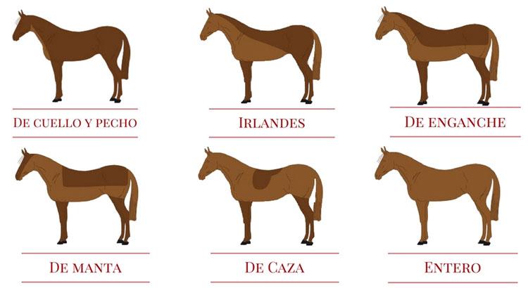 Por qué y cuándo esquilar a tu caballo? - Blog de Hípica y Equitación