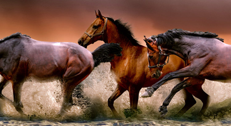 Tienda de Hípica y Equitación