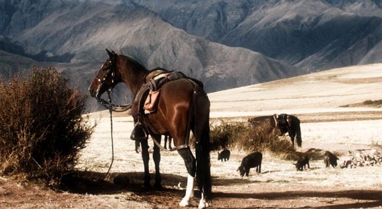 Los mejores lugares para montar a caballos
