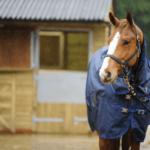 Mantas de exterior para caballo en invierno
