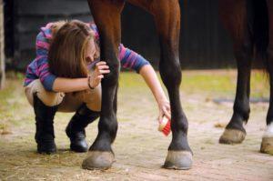 Una mujer cuidando las rozaduras en la piel de un caballo oscuro.