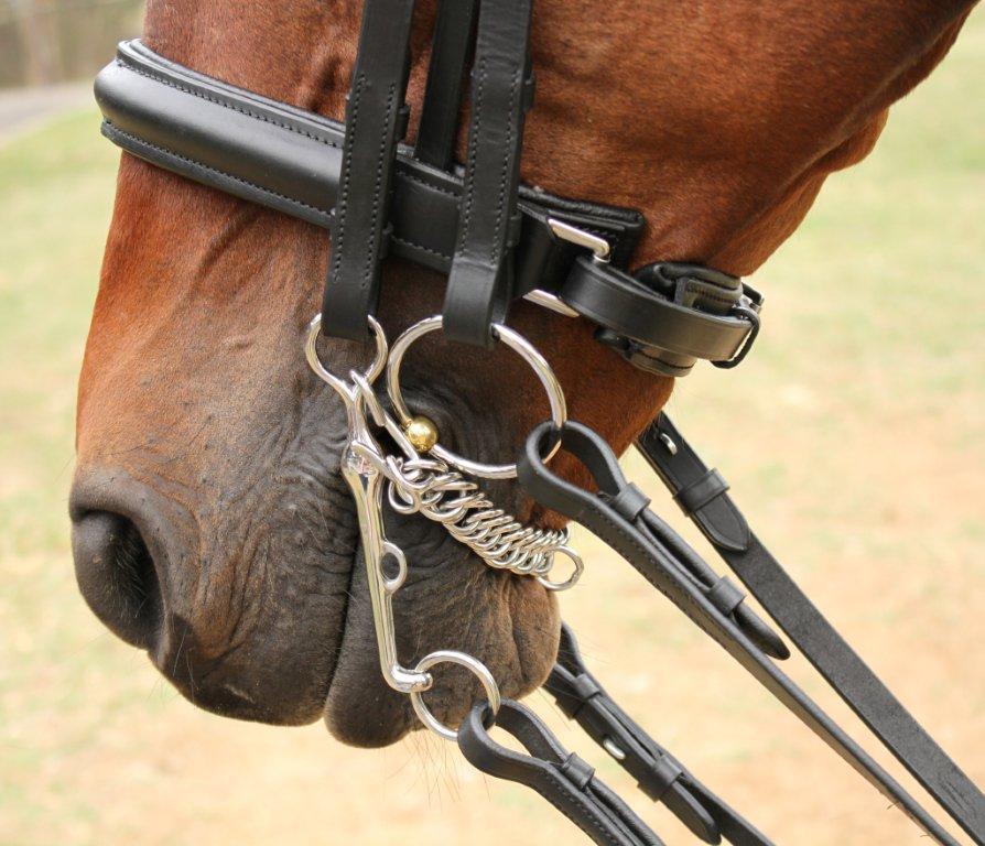Un caballo marrón con un bocado de doma para caballos