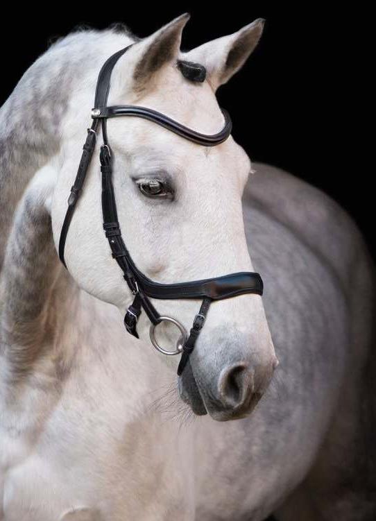 Un esbelto caballo blanco con bridas de cuero negro.