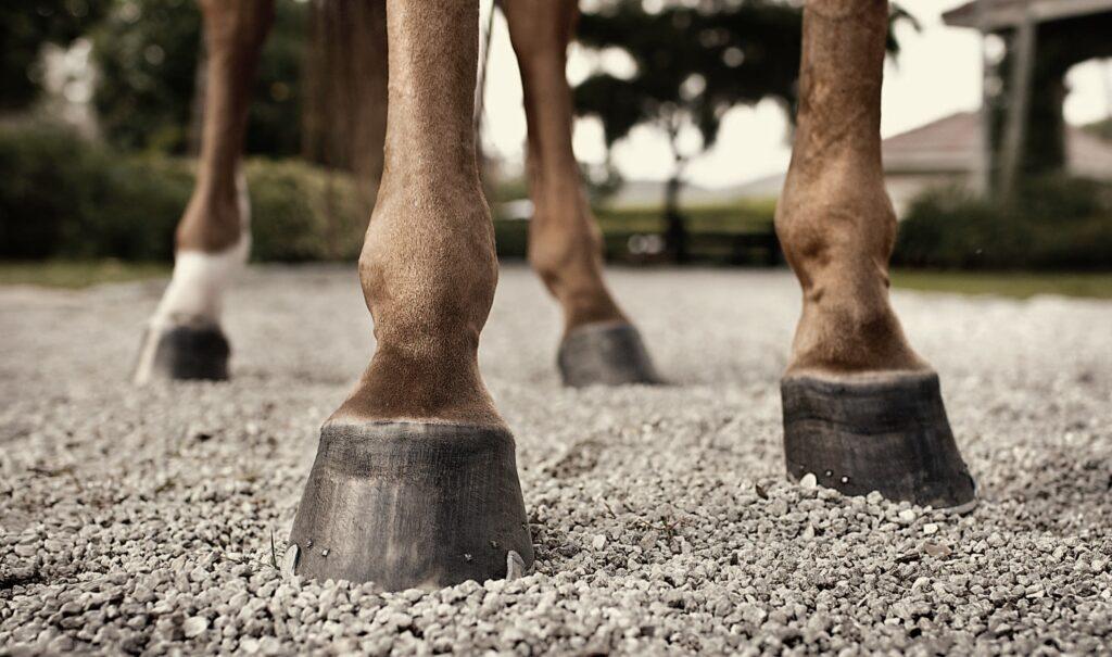 Los 4 cascos de un caballo marrón con una de sus patas de color blanco