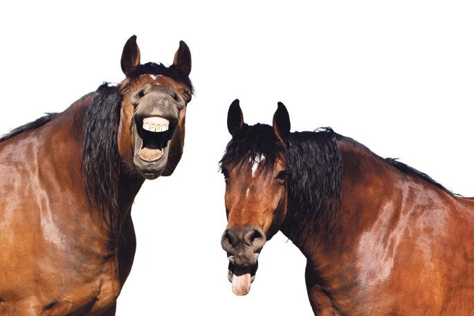 Un par de caballos de capa castaña y crin negra sonriendo a cámara. ¿Qué estarán pensando?