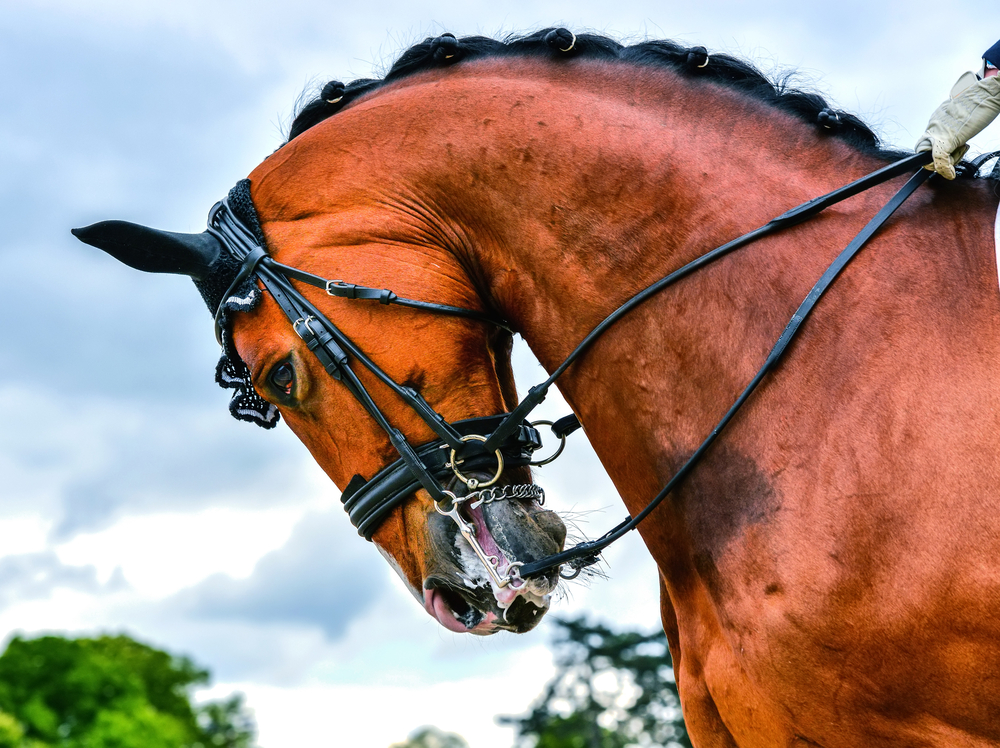 caballo con Hiperflexión