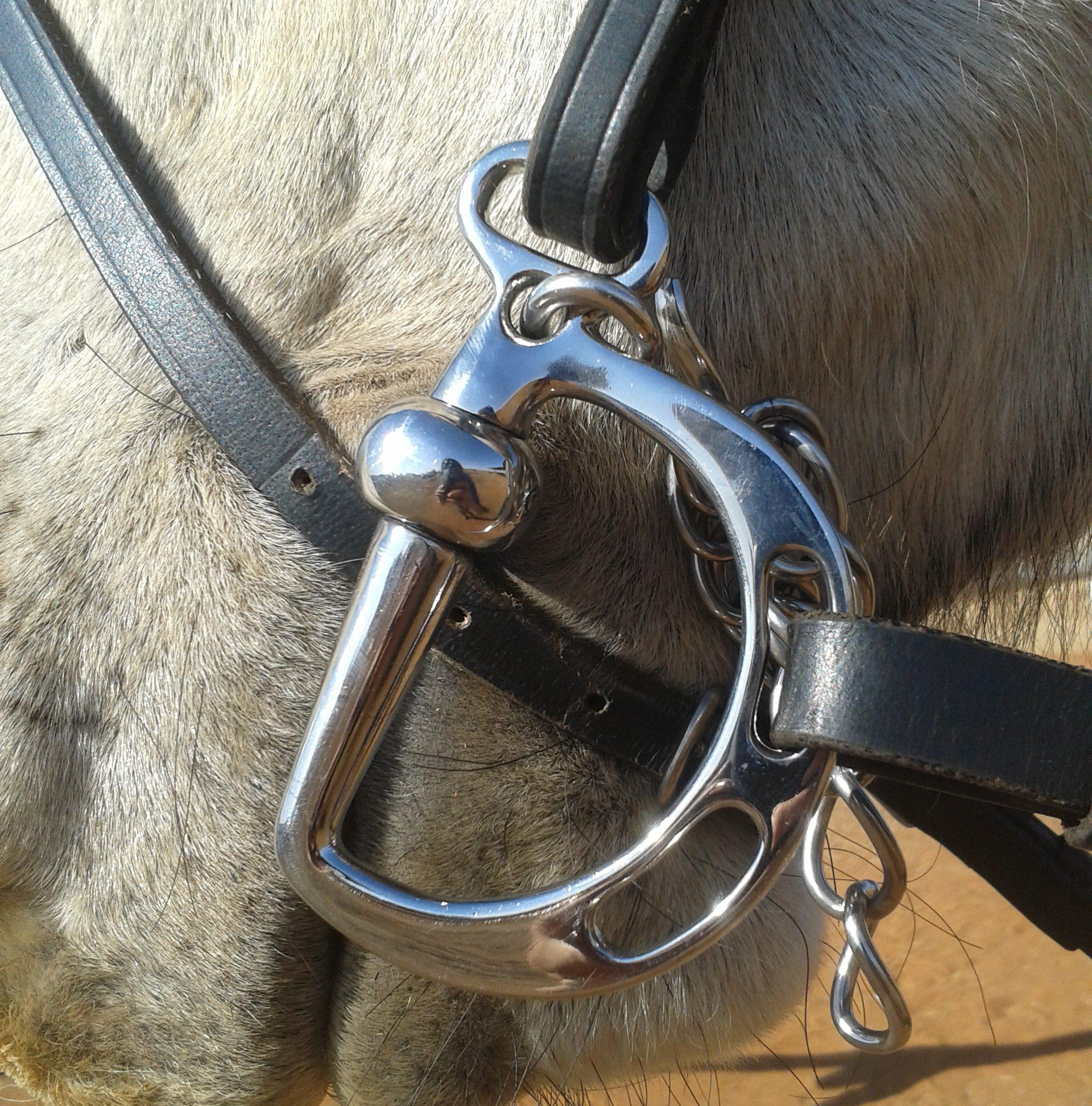 Un caballo claro con un bocado kimblewik bit para caballos