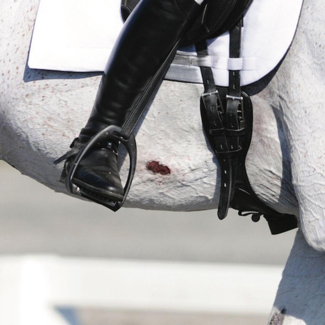 Las rozaduras en la piel del caballo por las espuelas han provocado heridas en su vientre.