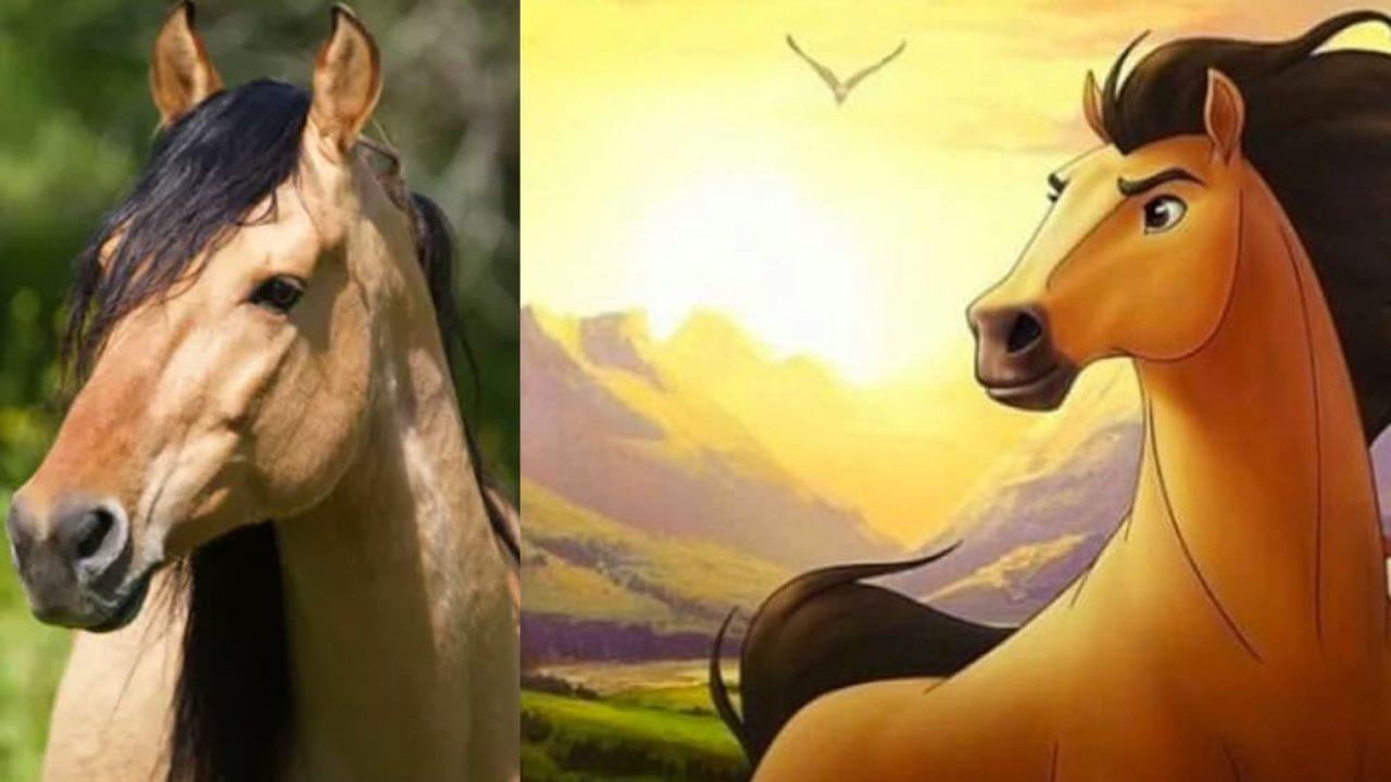 El Spirit real junto al Spirit que creó DreamWorks. Ambos miranhacia el horizonte.