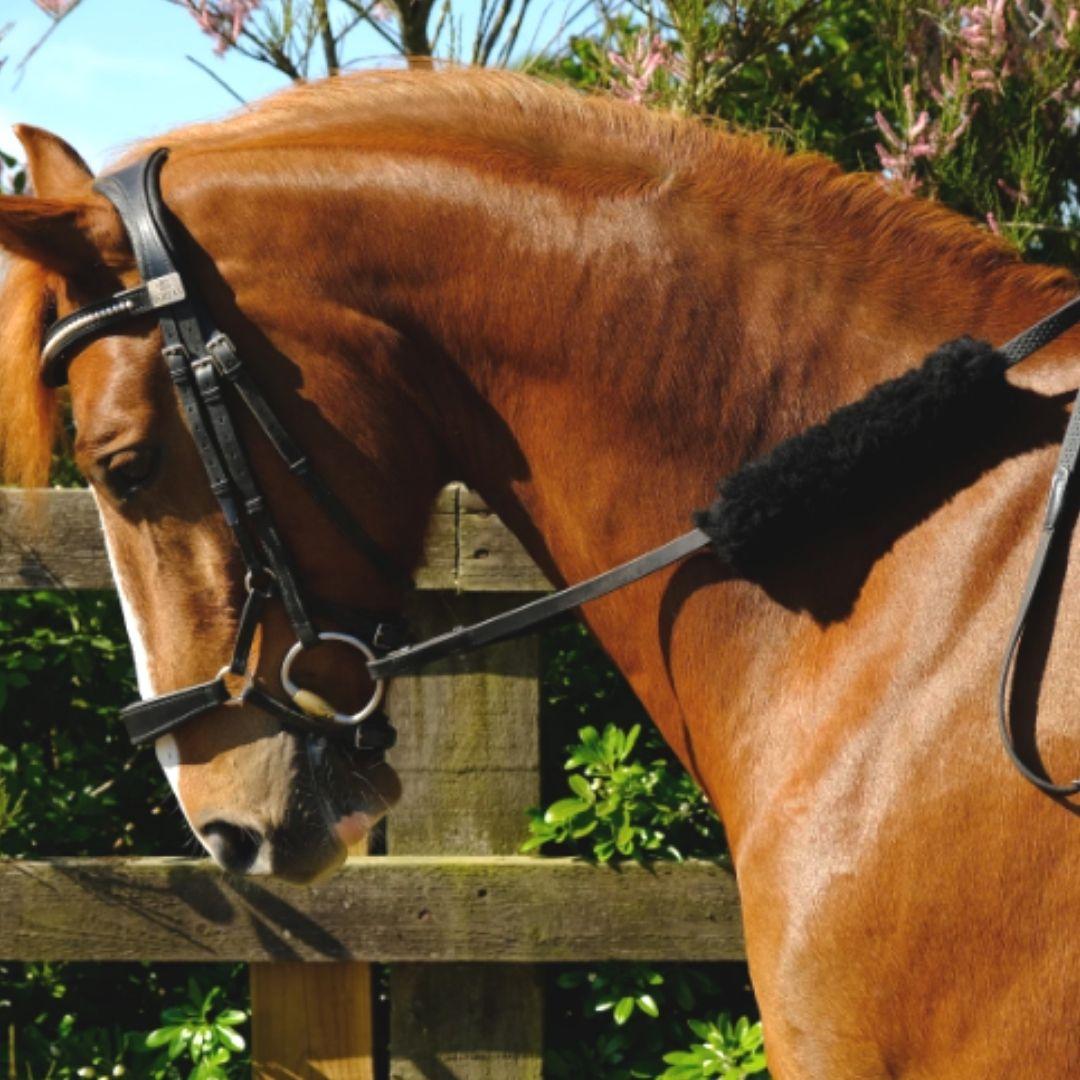 Un caballo marrón equipado con un protector de riendas. Muy útil para evitar las rozaduras en la piel del caballo.